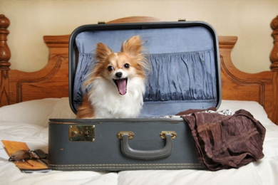Есть ли какие-то особенности перевозки домашних животных через границу РФ